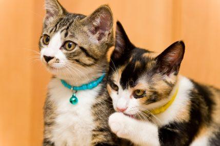 1年間にペットにかけた費用は犬48万円、猫23万円…2年連続で増加 画像